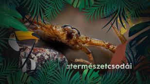 A skorpiók nemi élete egyszerre félelmetes és lenyűgöző