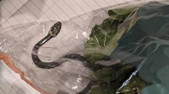 Mérgeskígyót találtak az Aldis salátában az ausztráloknál