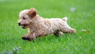 Őrült módjára rohangál a kutyád vagy a macskád? Így tehetsz ellene