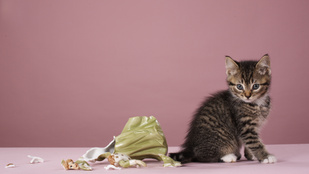 Miért szeretik a macskák odébb lökdösni a tárgyakat?
