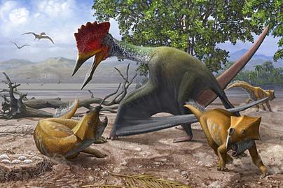 ajkaceratops-bakonydraco