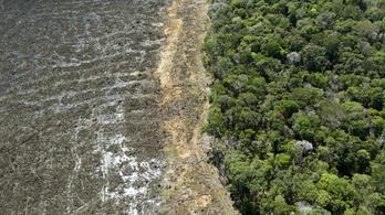 Brazília megígérte: egy évtizeden belül véget vetnek az esőerdő kiirtásának