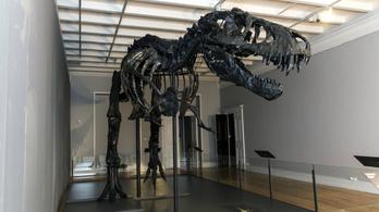 Megszámolták a dinókat: két és fél milliárd Tyrannosaurus rex élhetett a földön