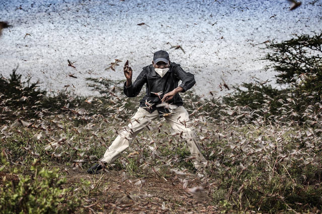 Az Év Sajtófotója díjra jelölt hat fotó egyike, a természet (sorozat) kategória harmadik helyezettje. Címe: Harc a sáskajárás ellen Kelet-Afrikában. Luis Tato fotóján egy kenyai település vezetője próbál elzavarni egy nagyobb sáskahadat 2020. április 24-én.