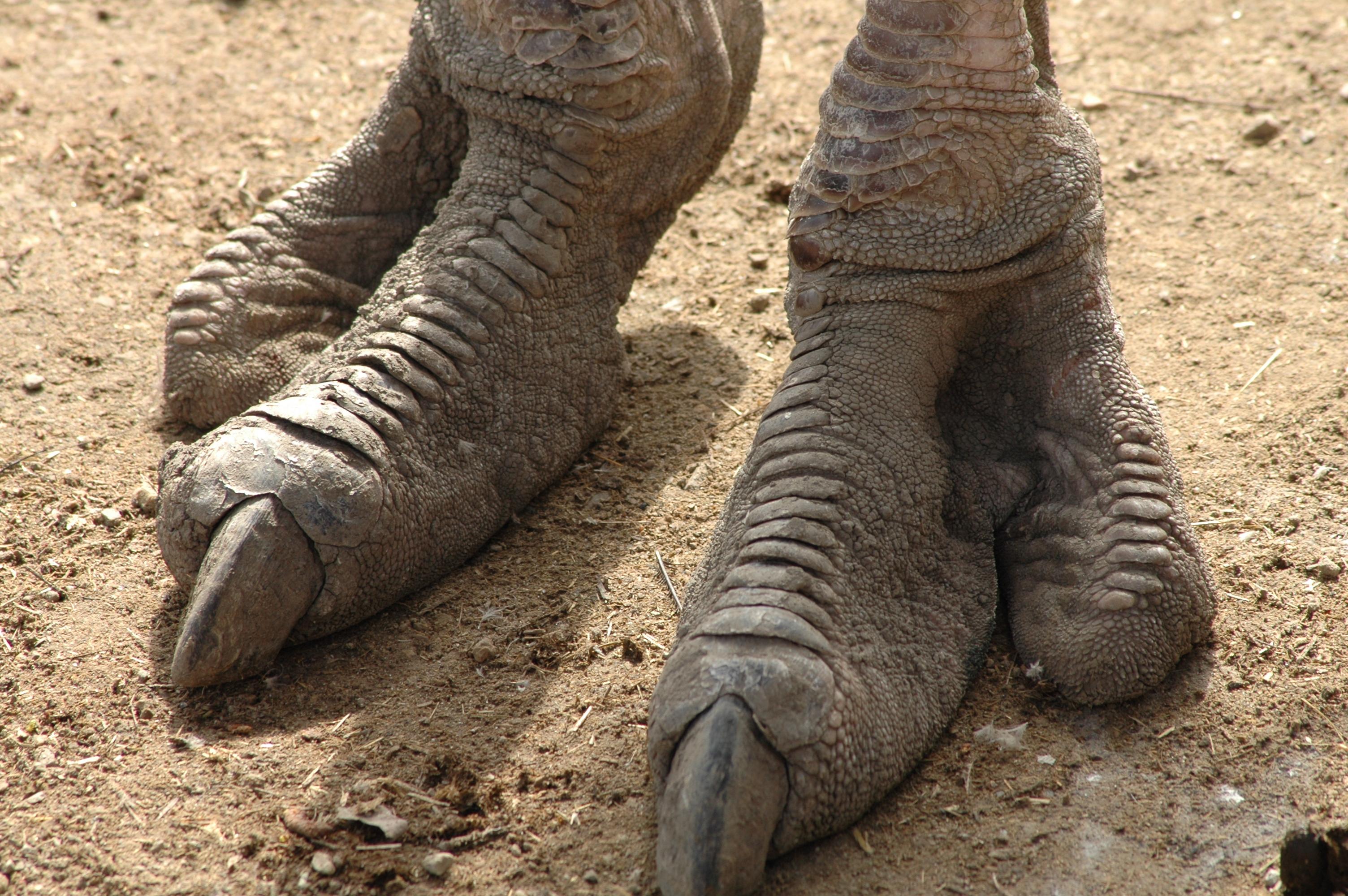 Mintha egy dinoszaurusz lába lenne a képen: tudod, kihez tartozik?