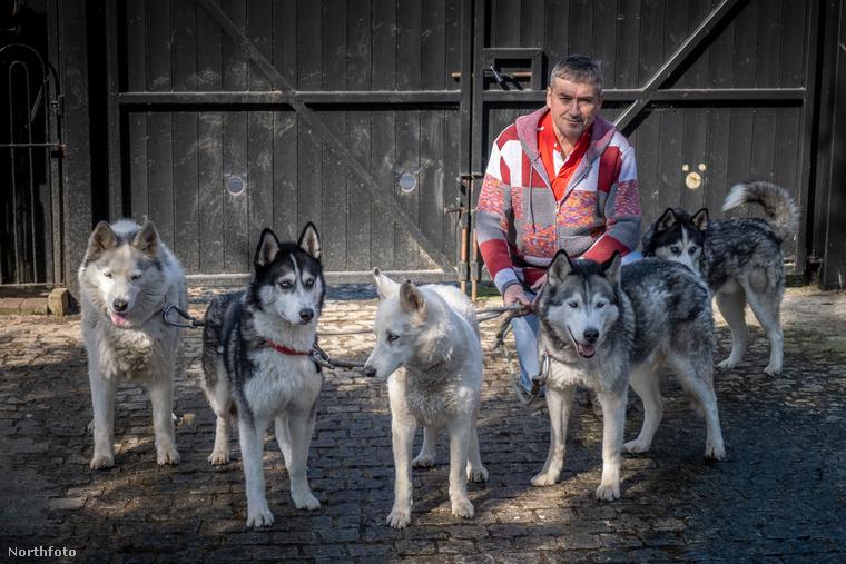 A kíváncsi kutyáknak a kép hátterében látható kapukba vájta a gazda ezeket a praktikus, mikiegérfejekre emlékeztető lyukakat a nézelődéshez.