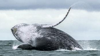 2020 az óceánok legcsendesebb éve volt