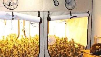 Kábítószert termesztettek egy sátorban a budai lakóház harmadik emeletén