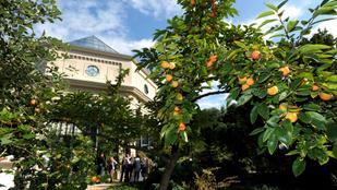 Ismét kinyit és programokat szervez a Füvészkert a Föld napja alkalmából
