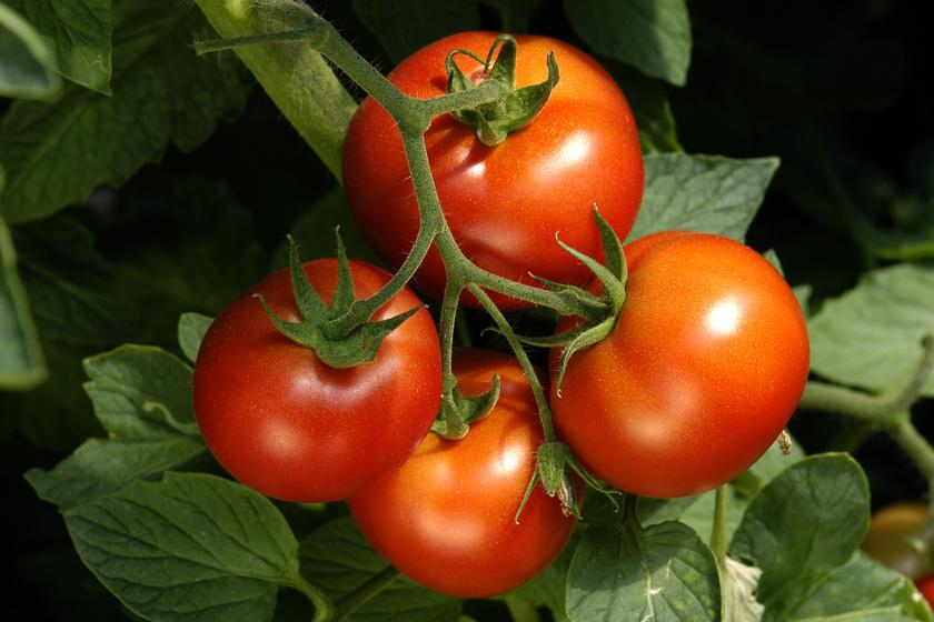 Hogyan lehet burjánzó, dúsan termő veteményeskerted? Kövesd Megyeri Szabolcs kertész tanácsait