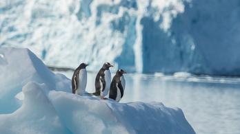 Érzékenyen reagálnak a pingvinek a zajokra