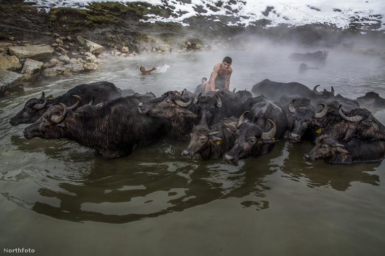 És hogy miért jó, hogy a vízben álló állatok hátára fel lehet mászni...?