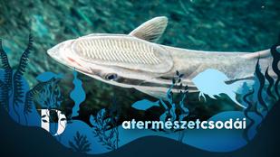 Ez a hal több alkalommal is megváltoztatta a történelem menetét