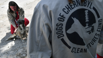 Önkéntesek mentik a csernobili zóna kutyáit