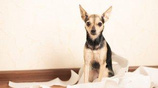 Kutyák és a bosszú: ezért piszkít be, ha elmész otthonról