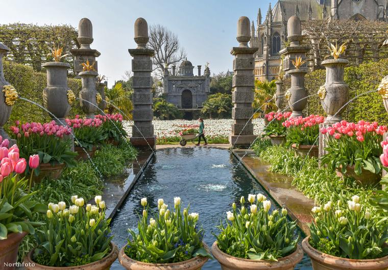 A Nyugat-sussexi Arundel-kastélyban készült ez a fotó, amelyet a nap képének választottunk: tulipánfesztivál van ott, ami ilyen látvánnyal jár.Az elsuhanó nőt Rose Philpotnak hívják, aminél jobb neve nemigen lehet egy kertésznek.