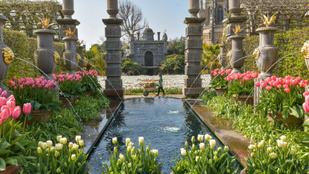 A nap képei: tulipánfesztivál az Arundel-kastélyban