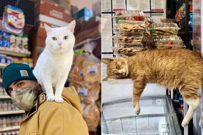 cicák-boltban-borító