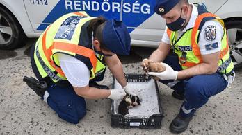 A biztos haláltól mentették meg a rendőrök a pár napos kiskutyákat