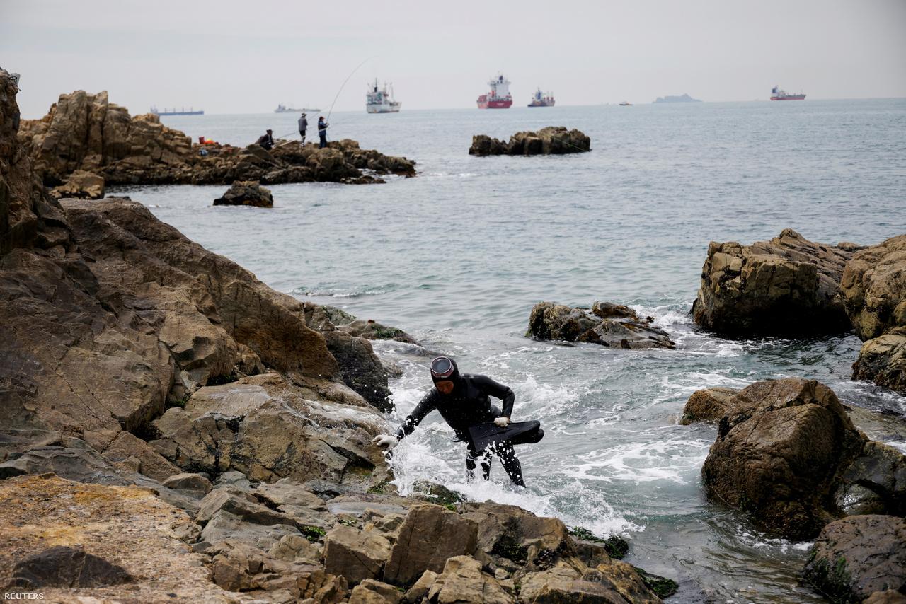 Egy idős henyo kimászik a tengerből Puszan előtt, 2021. április 6-án.