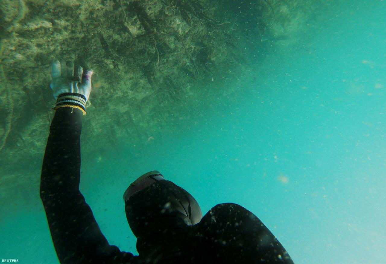"""A 28 éves Dzsin szerint a tengeri moszat és hínár eltűnése átalakítja az élővilágot, és a henyóknak már 12 méter mélyre kell merülniük, hogy zsákmányra tegyenek szert. Ez pedig igencsak veszélyes.                         """"Ma már több golflabdát találok, mint tengeri uborkát"""" – panaszkodik a környezetszennyezésre."""