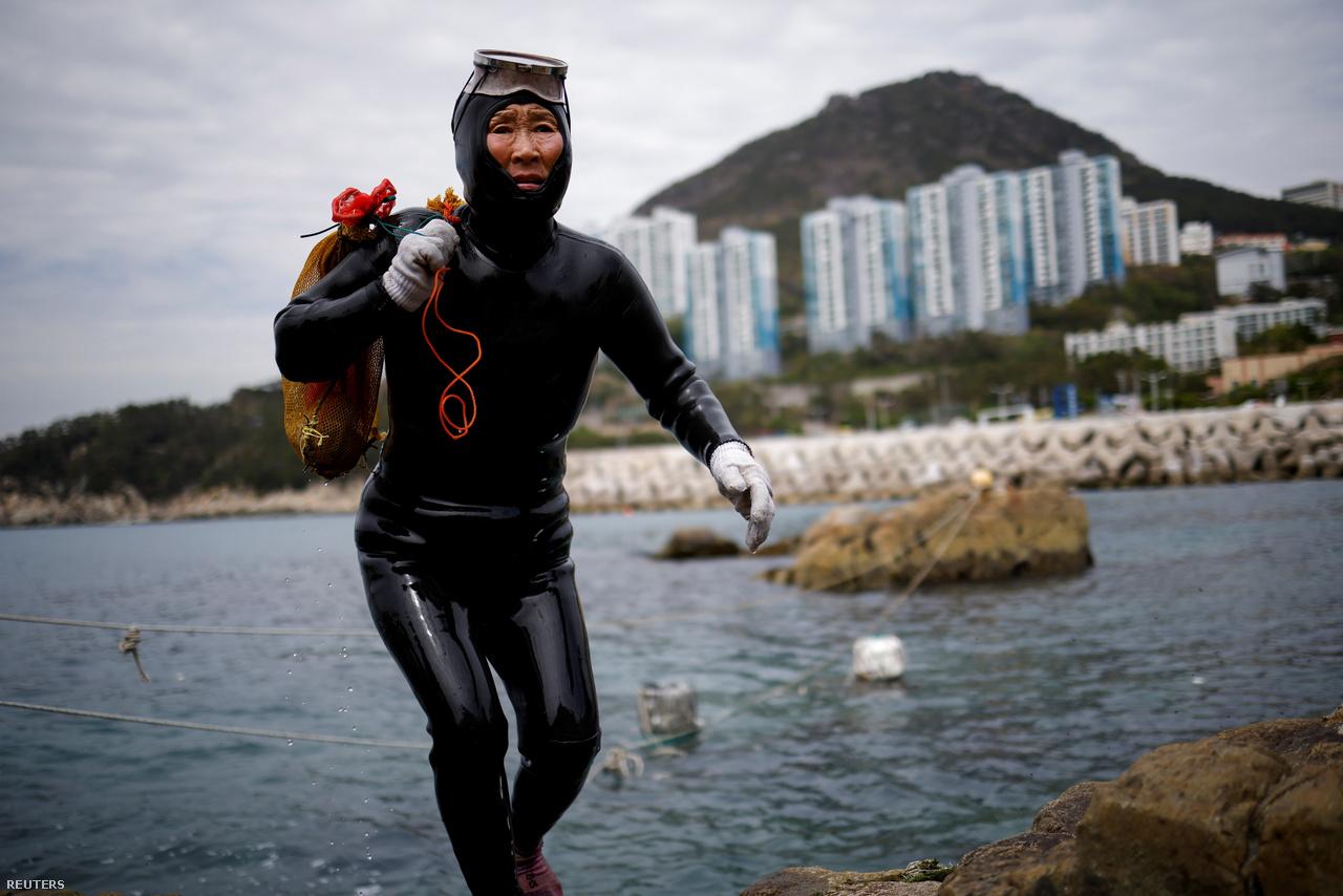 A 69 éves Ko Kumszun cipeli a zsákmányt, amit Puszan környékén gyűjtött a tenger fenekén 2021. április 6-án.