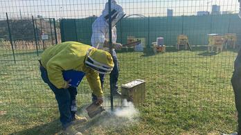 Egymillió milánói méh népesíti be a dizájner kaptárokat