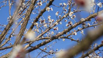 Visszatér a tavasz, de azért nem fogunk megsülni