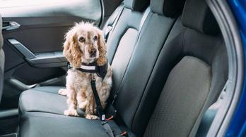 A kutyatartás is közrejátszik abban, hogy egyre nagyobb autókat veszünk