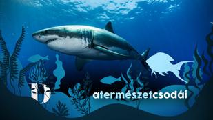 Az emberek és cápák harcában a cápák állnak vesztésre