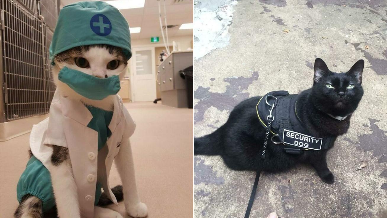 dolgozó-macskák-borító