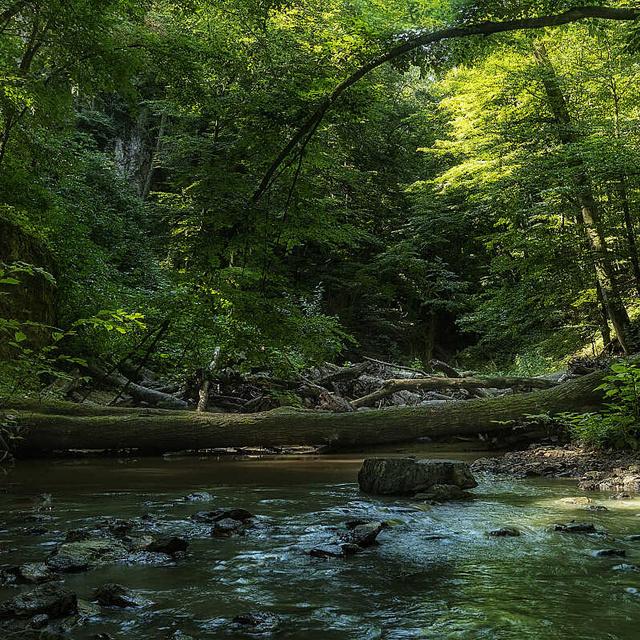 8 csodálatos, érintetlen erdő Magyarországon: álomszép vidékeken vezet az út