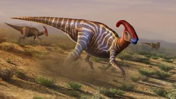 Ismeretlen kacsacsőrű dinoszaurusz nyomára bukkantak Japánban