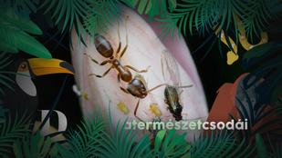 A rovarfaj, ami leigázhatja a Földet: éppen Európát készül bevenni