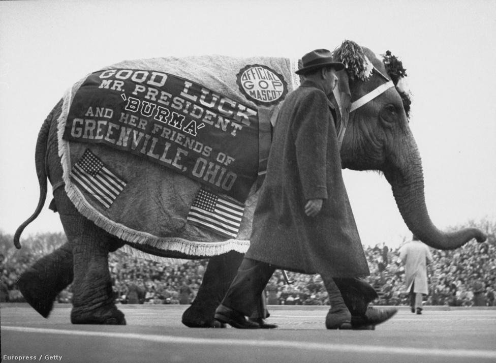 Egy ohiói férfi jókívánságokat tolmácsoló elefántját is elhozta Dwight D. Eisenhower elnök első eskütételére.