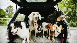 Magyar vizsla vagy agár? Felismered a népszerű kutyafajtákat?