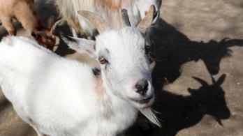 Állatkínzás miatt elítéltek egy érdi gazdát