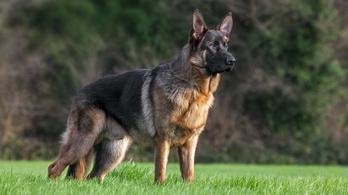 Gyerekre támadt egy kutya a játszótéren, lelőtték a rendőrök