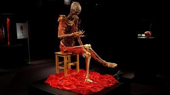 Megint megnézhetjük, milyen az emberi test belülről