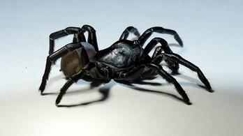 Különös új pókfajt találtak Floridában