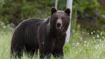 Törvénytelenül lelőtte Európa legnagyobb barnamedvéjét a liechtensteini herceg