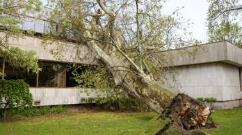 Villamosra és házra dőlt fák – küzdöttek a tűzoltók az ítéletidő után