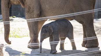 Ön is szavazhat, mi legyen a neve a kiselefántnak