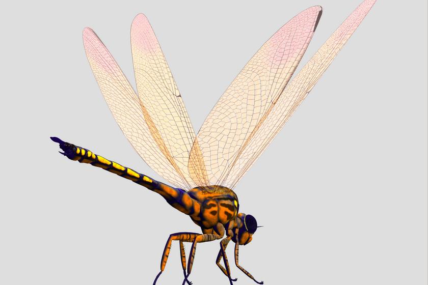Ma is élő állatok óriási elődjei: a szitakötők apró muslicák az ősiekhez képest