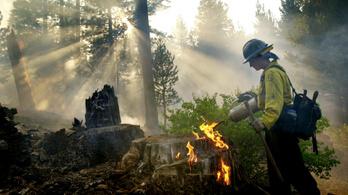 A tavalyi tűzvész óta parázslik egy mamutfenyő