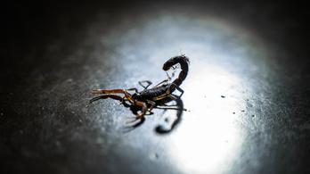 Skorpió mart meg egy eladónőt a szupermarketben