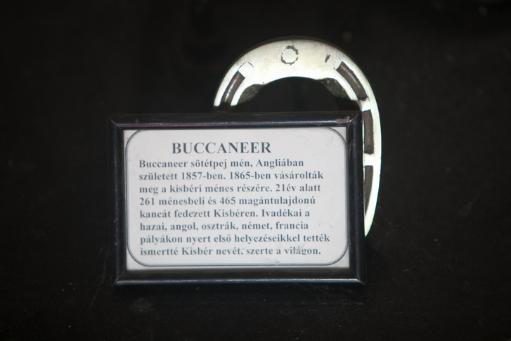 Buccaneer patkója. A sötétpej mén nemzette Kisbért
