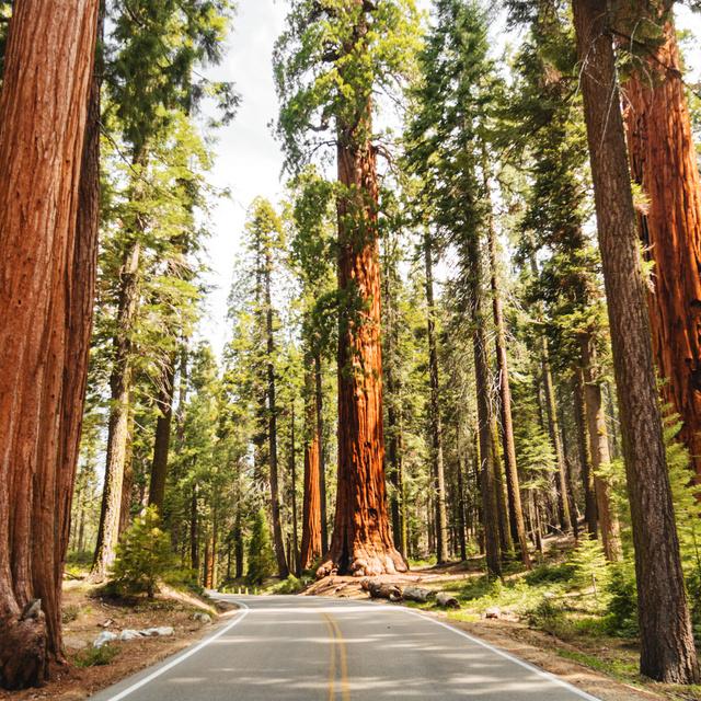 Furcsa jelenségre bukkantak a nemzeti parkban: hónapokkal az erdőtűz után is füstölög egy fa