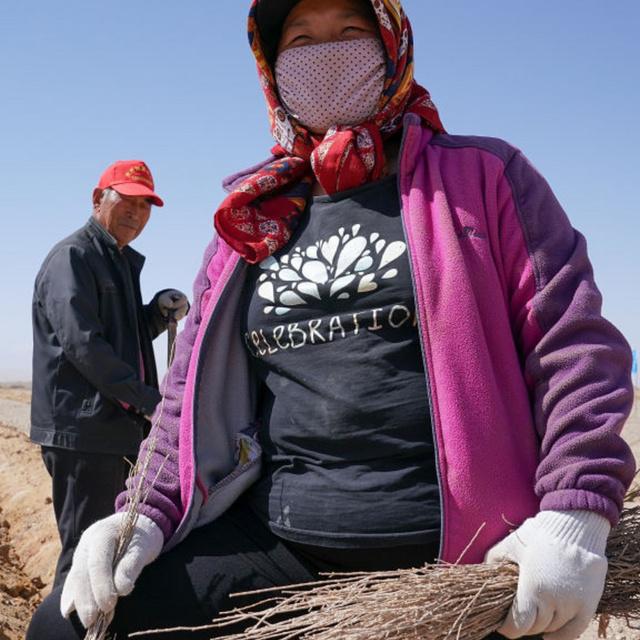 20 éve költözött a sivatagba a házaspár, eddig 70 ezer fát ültettek: nyugdíjba vonulásuk után váltottak életet