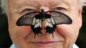A természet csodáiról szólva: David Attenborough 95 éves